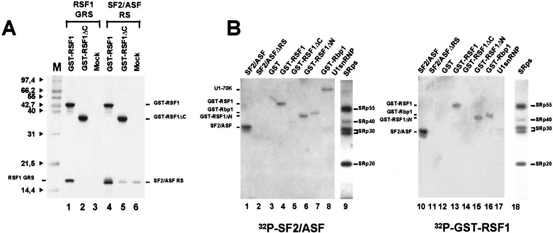 Antagonism between RSF1 and SR proteins for both splice-site