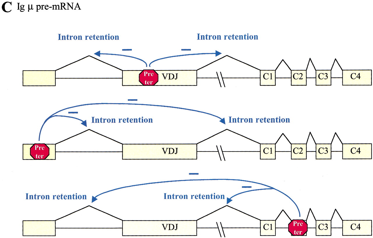 NASty effects on fibrillin pre-mRNA splicing: another case of ESE